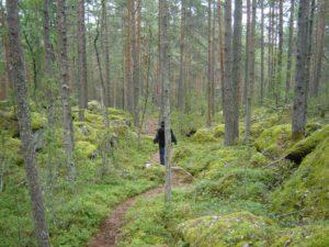 Wanderweg im Nationalpark Linnansaari