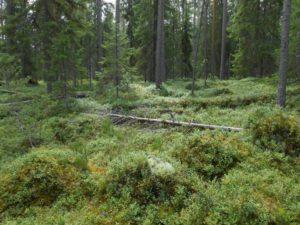 im Pyhä-Häkki Nationalpark
