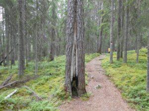 Wanderweg durch den Pyhä-Häkki Nationalpark