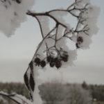 Schnee auf Ast