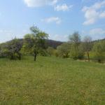 Schiffenberger Wald