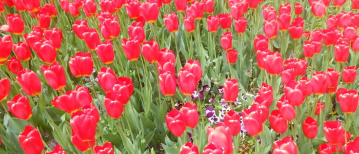 Blumenmeer am Kloster