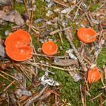 Orange-Becherling